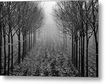 Tree Line Metal Print by David  Hubbs