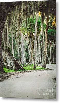 Tree Lined Dirt Road In Vintage Metal Print by Liesl Marelli