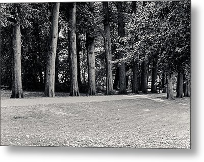 Tree Lined Path Metal Print by Edward Myers