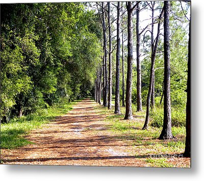 Tree Lined Path Metal Print
