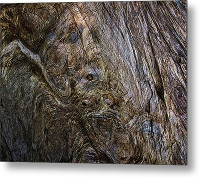 Metal Print featuring the photograph Tree Memories # 19 by Ed Hall