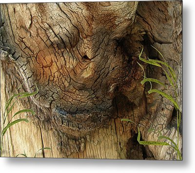 Metal Print featuring the photograph Tree Memories # 22 by Ed Hall