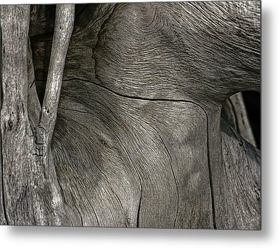 Metal Print featuring the photograph Tree Memories # 26 by Ed Hall