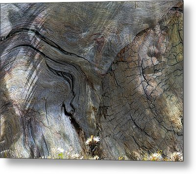 Metal Print featuring the photograph Tree Memories # 28 by Ed Hall