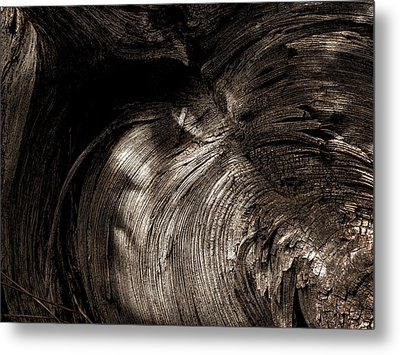 Metal Print featuring the photograph Tree Memories # 31 by Ed Hall