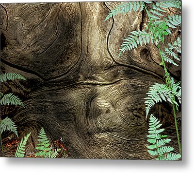 Metal Print featuring the photograph Tree Memories # 32 by Ed Hall