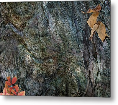 Metal Print featuring the photograph Tree Memories # 33 by Ed Hall