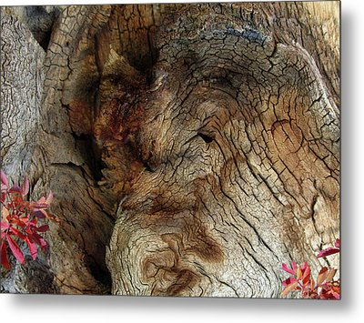 Metal Print featuring the photograph Tree Memories # 34 by Ed Hall