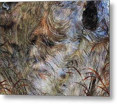 Metal Print featuring the photograph Tree Memories # 35 by Ed Hall