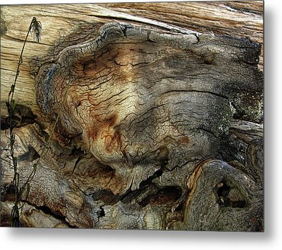 Metal Print featuring the photograph Tree Memories # 36 by Ed Hall