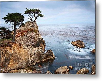 Tree Of Dreams - Lone Cypress Tree At Pebble Beach In Monterey California Metal Print