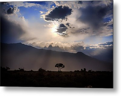 Metal Print featuring the photograph Tree Of Light by Cat Connor
