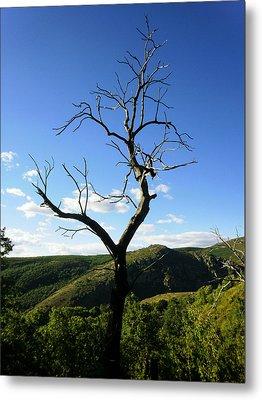 Tree Metal Print by Oliver Johnston