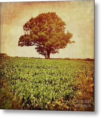 Tree On Edge Of Field Metal Print