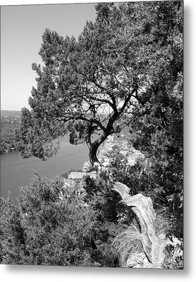 Tree On Mount Bonnell Metal Print by Lindsey Orlando