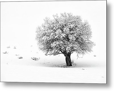 Tree On Snowy Slope Metal Print
