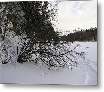 Tree Over Frozen Lake Metal Print by Richard Mitchell