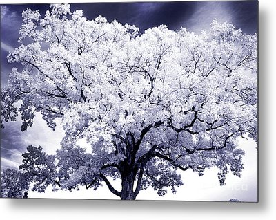 Metal Print featuring the photograph Tree by Paul W Faust - Impressions of Light