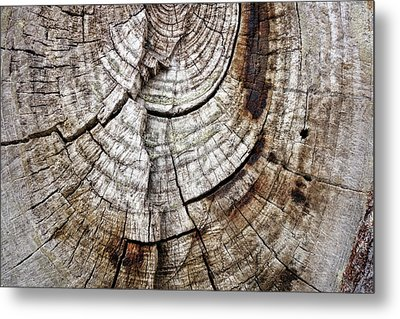 Tree Rings - Photography Metal Print by Ann Powell