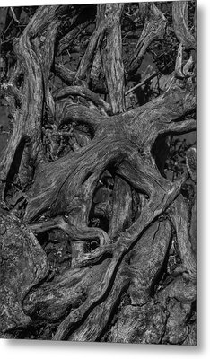 Tree Roots Black And White Metal Print by Garry Gay