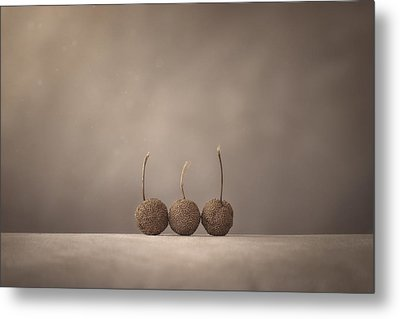 Tree Seed Pods Metal Print