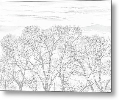 Metal Print featuring the photograph Tree Silhouette Gray by Jennie Marie Schell