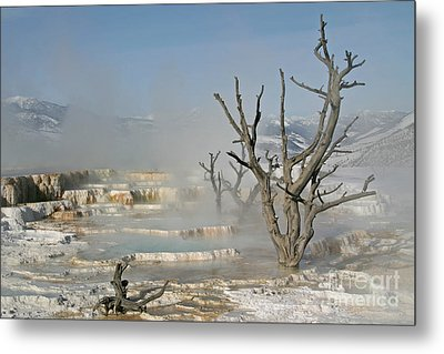 Tree Skeletons In The Mist Metal Print