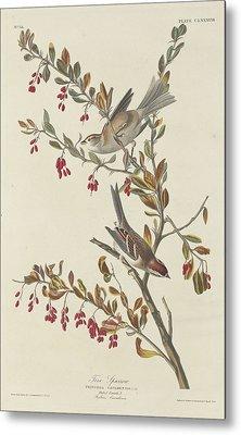 Tree Sparrow Metal Print by Anton Oreshkin