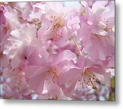 Tree Spring Pink Flower Blossoms Art Print Baslee Troutman Metal Print by Baslee Troutman