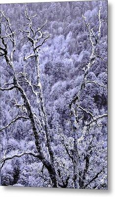 Tree Sprite Metal Print