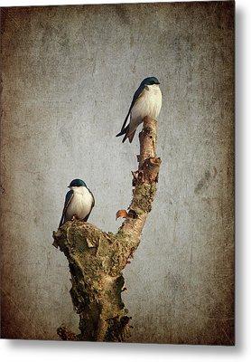 Tree Swallows Metal Print by Al  Mueller