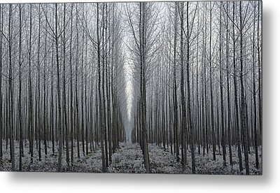 Tree Symmetry Metal Print