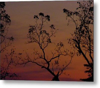 Tree Top After Sunset Metal Print by Donald C Morgan