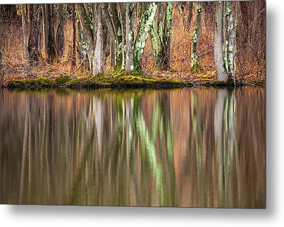 Tree Trunks Reflecting Metal Print by Karol Livote