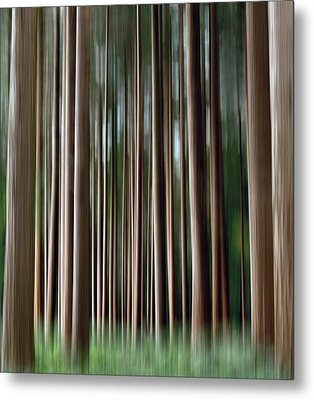 Tree Trunks Metal Print by Wim Lanclus