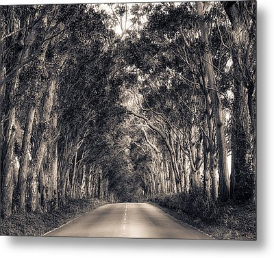 Tree Tunnel Metal Print by Robert  FERD Frank