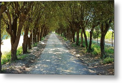 Metal Print featuring the photograph Tree Tunnel by Valentino Visentini