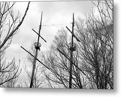 Metal Print featuring the photograph Tree Types by Valentino Visentini