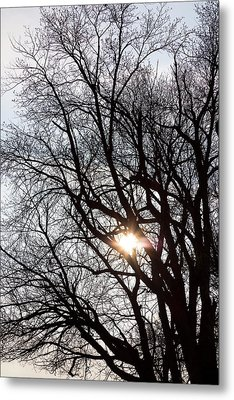 Metal Print featuring the photograph Tree With A Heart by James BO Insogna