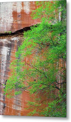 Tree With Red Canyon Wall Metal Print by Joseph Smith