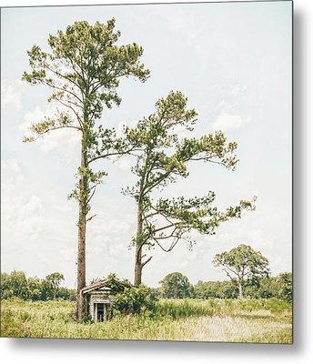 Treehugger Metal Print by Humboldt Street