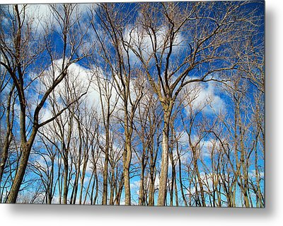 Metal Print featuring the photograph Trees And Clouds by Valentino Visentini