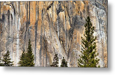 Trees And Granite Metal Print