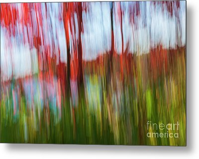 Metal Print featuring the photograph Trees And Lake by Elena Elisseeva