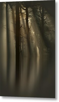 Trees And Light Metal Print by Andy Astbury