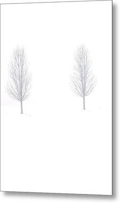 Trees And Snow Metal Print by Daniel Thompson