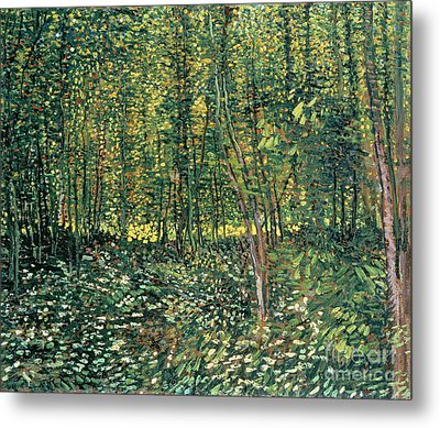 Trees And Undergrowth Metal Print by Vincent Van Gogh