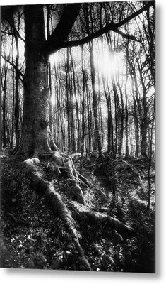 Trees At The Entrance To The Valley Of No Return Metal Print