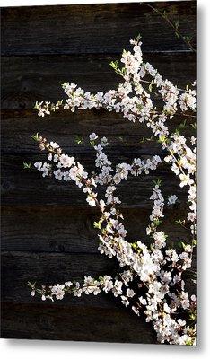 Trees - Blooming Flowers Metal Print