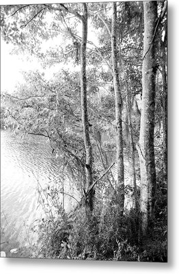 Trees By The Lake Metal Print